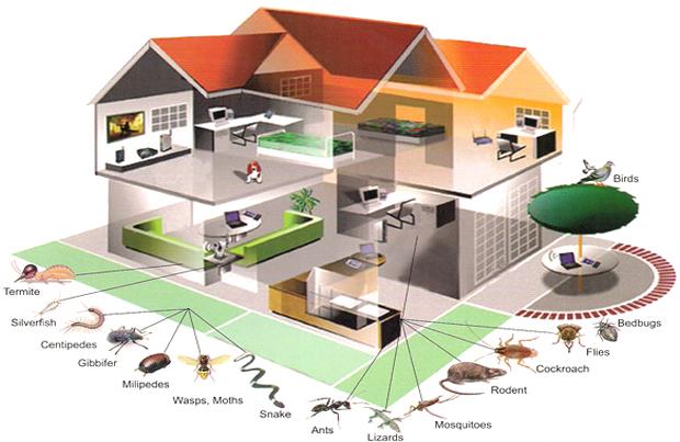 pest control Kansas City