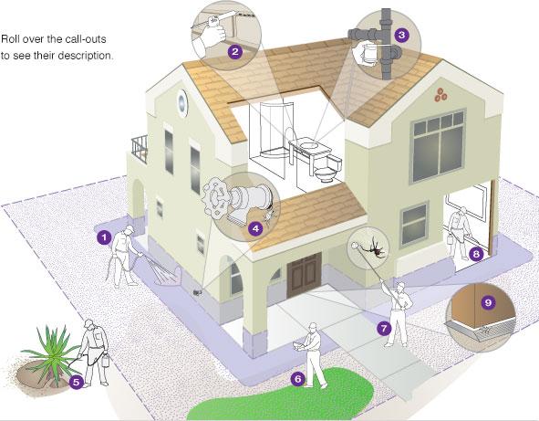 Pest Control Steps