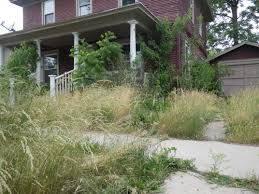 Weeds around home