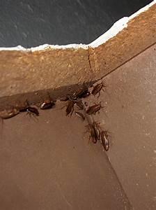 Natural Roach Extermination