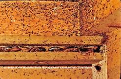 Roach Extermination Kansas City