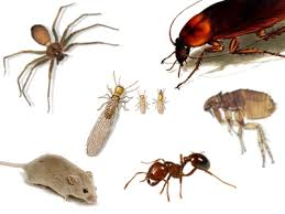 Ants, Roaches, Spiders and Insects