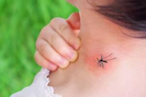Mosquitoes Bites