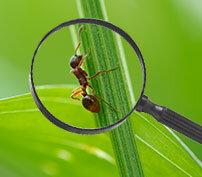 Pest Library-pest control near me