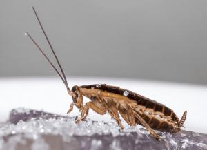 Roache in Kitchen