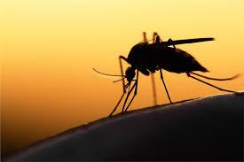 Nаturаl moѕquito repellents