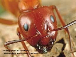 Common Ants In Kansas City