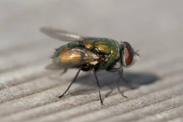 Keep BlowFlies out of Kansas City Home