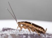 5 Ways To kill a Roaches