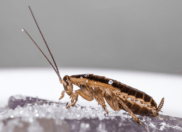 Roach Exterminator Kansas City