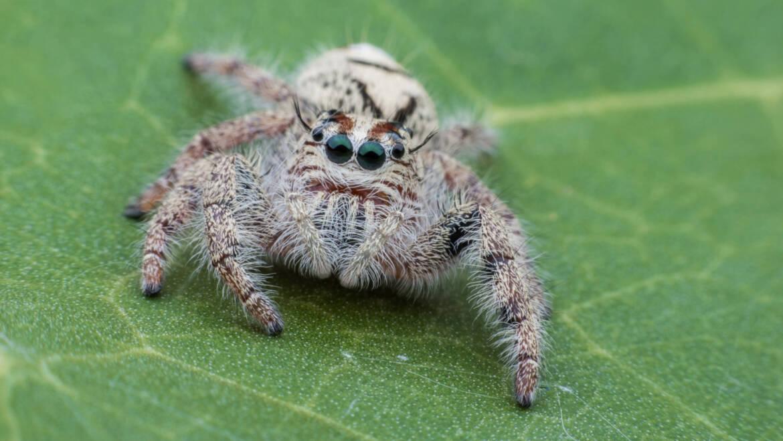 Common Spiders in Kansas City