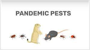 Pest Control and Covid-19