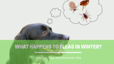 Does the Weather Affect Fleas and Ticks