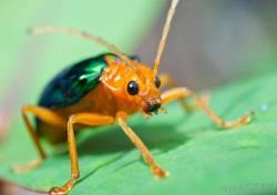Japanese Beetles in Kansas City