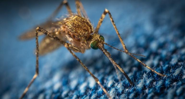 Do Mosquitoes Transmit Covid ?